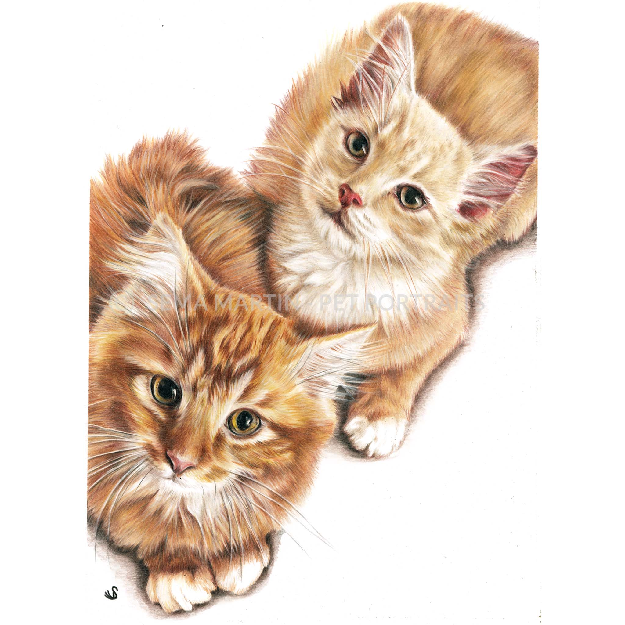 'Braemar & Finley' - USA, 8.3 x 11.7 inches, 2019, Color Pencil Portrait of two cute ginger tabby kittens