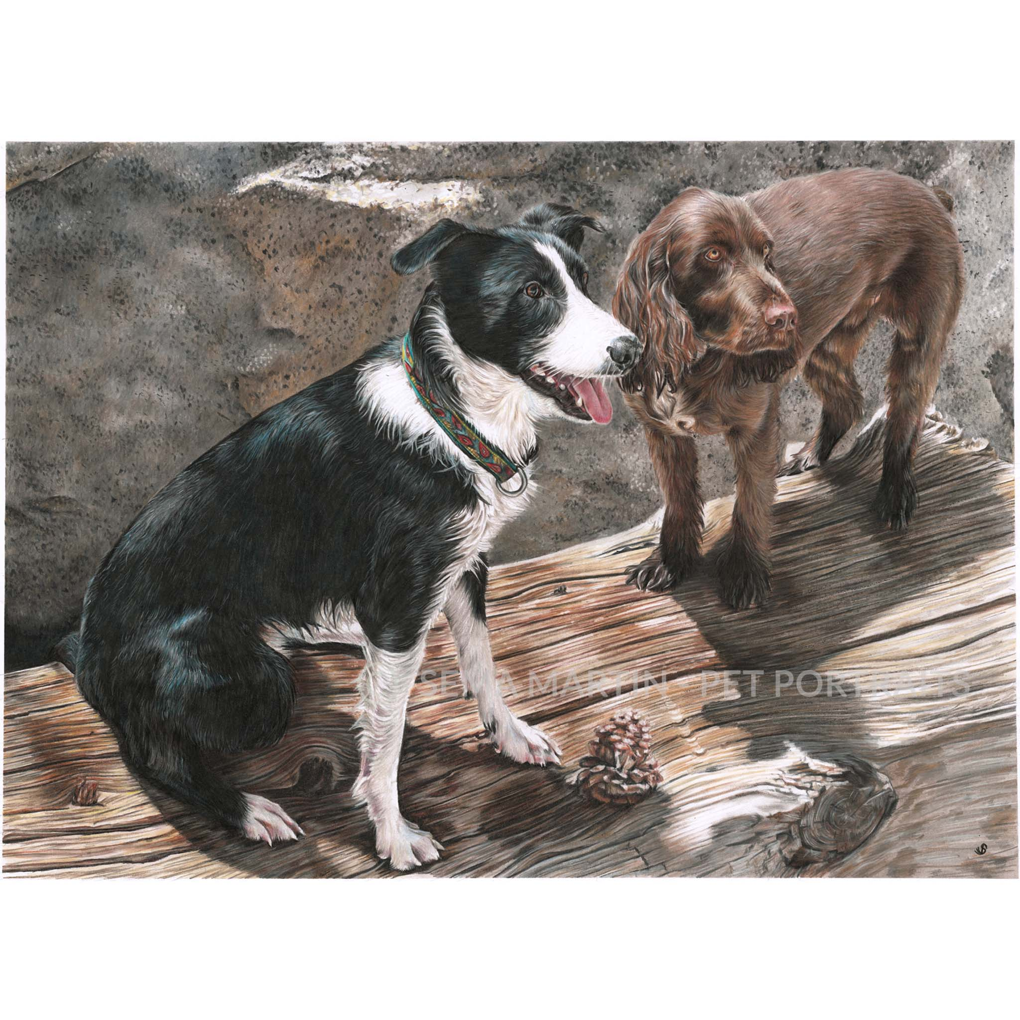 'Miki & Race' - USA, 16.5 x 23.4 inches, 2019, Color Pencil Portrait of a Border Collie and a Spaniel sitting on a log together