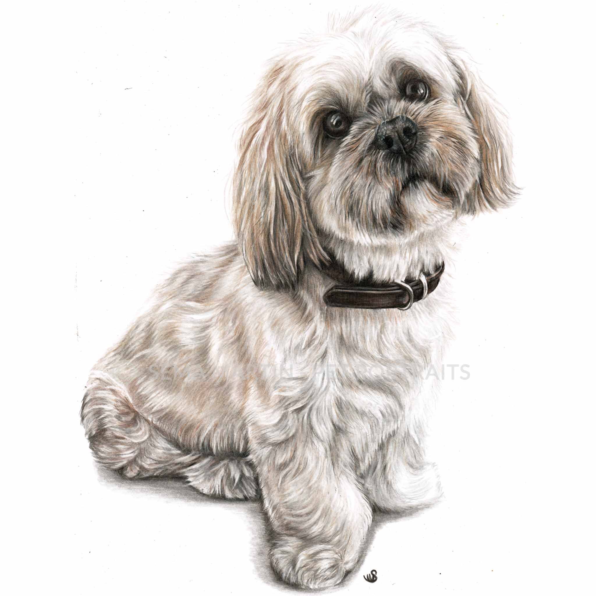 Copy of 'Ruby' - UK, 8.3 x 11.7 inches, 2019, Colour Pencil portrait of a Lhasa Apso