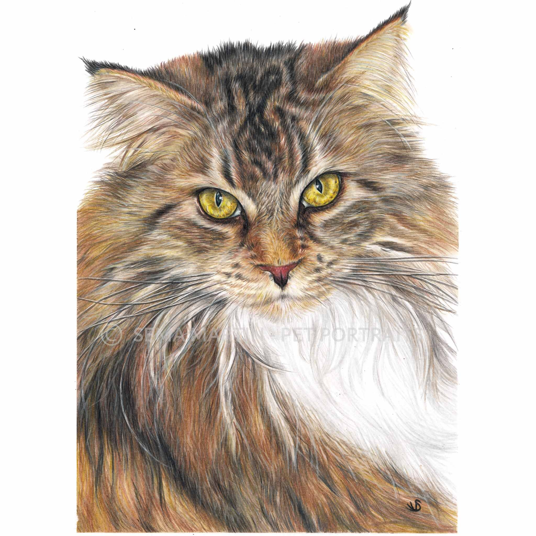 'Libby' - USA, 8.3 x 11.7 inches, 2019, Color Pencil Cat Portrait of a Maine Coon