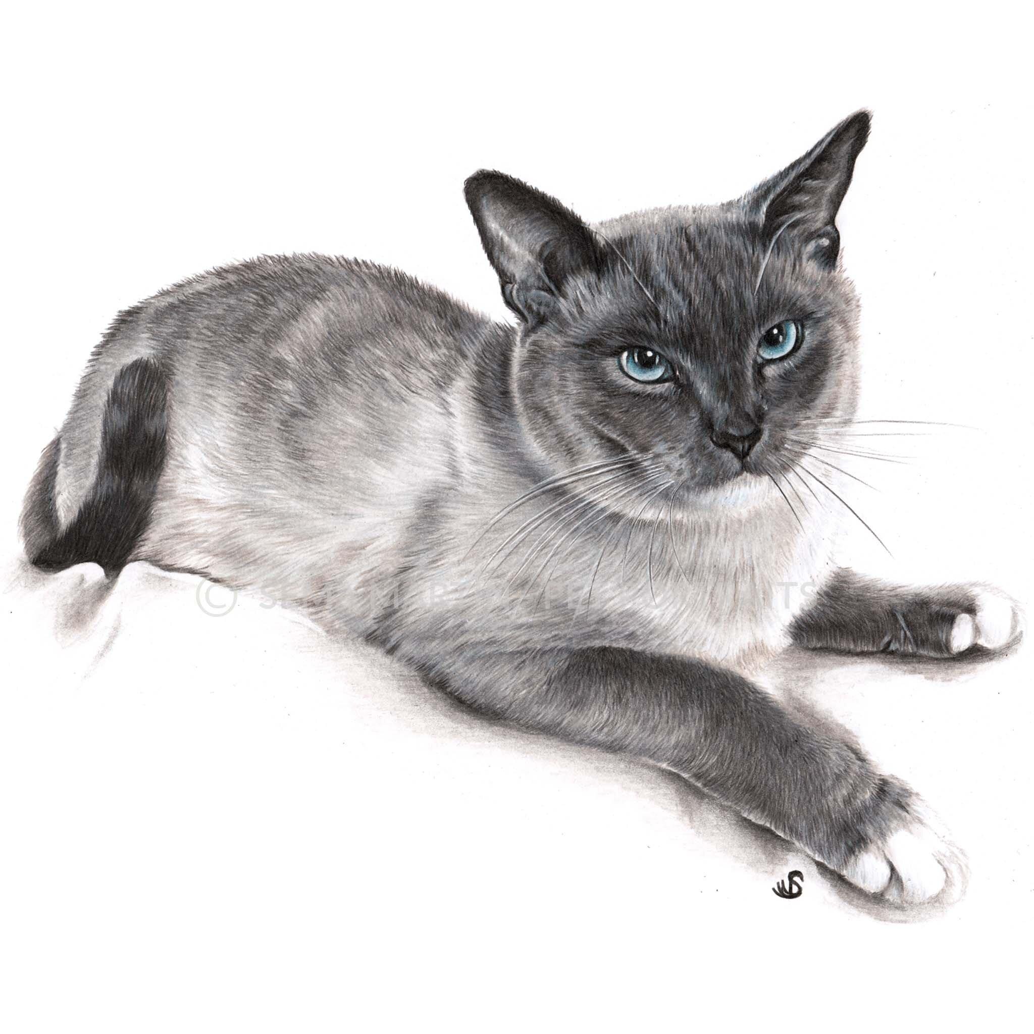 'Jazpurr' - USA, 8.3 x 11.7 inches, 2019, Color Pencil Portrait of a Snowshoe Cat