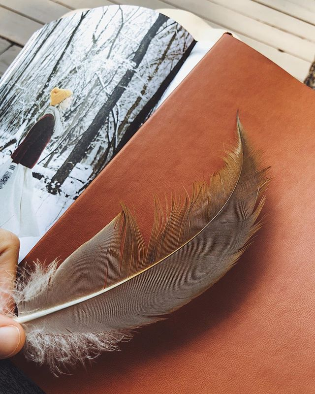 Reading goodness, writing curiosity + finding feathers. #cabinlife ✨🌲🍂 • • • • • • #upnorth #exploremn #foundfeathers #sandcrane #naturebeauty #writinglife #secretproject #letsgetlost #curiousnotes #talesfromaforagerskitchen #lakeliving #staycurious #staykind