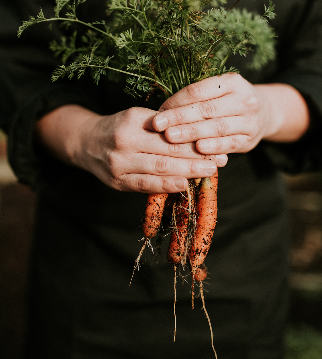 brambles-carrots.png