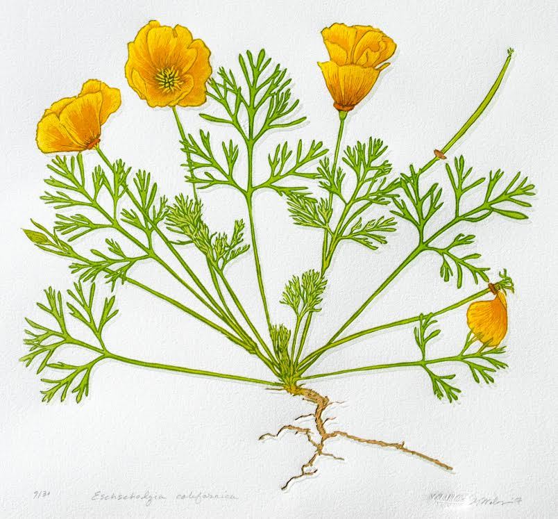 Poppy - Single plate Reductive linocut