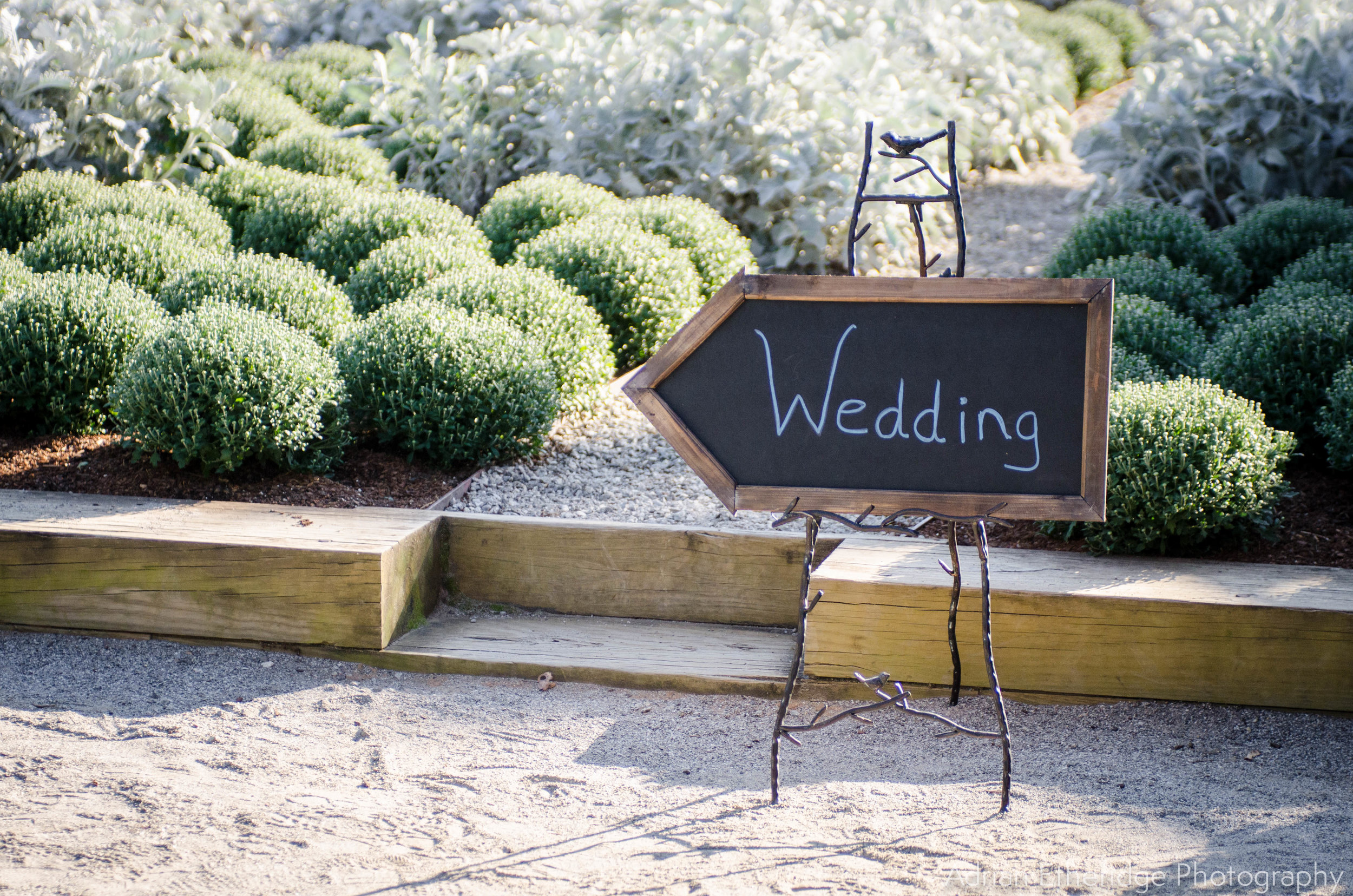 Fall Wedding Asheville WM-22.jpg