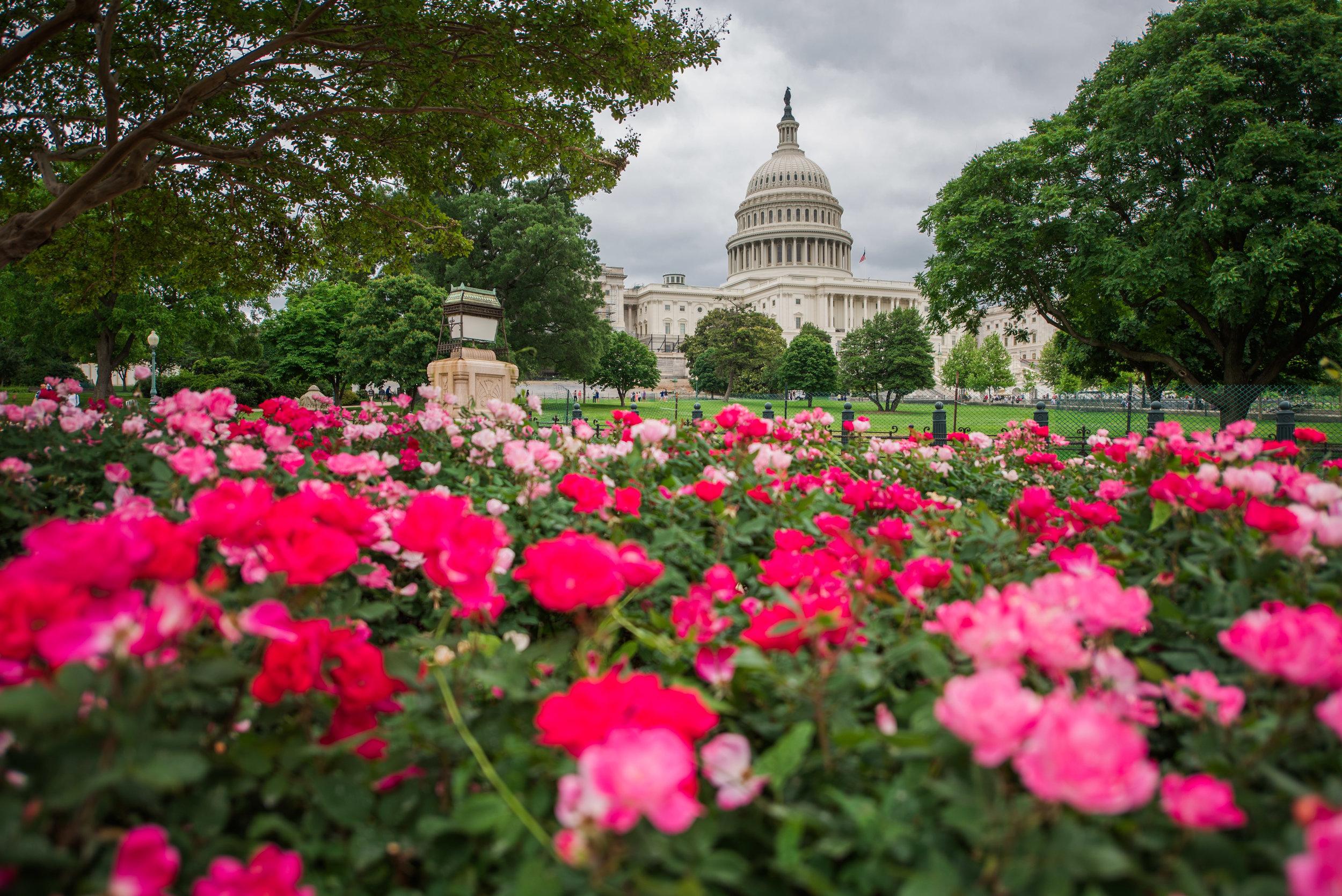 Washington DC Day 1-6.jpg