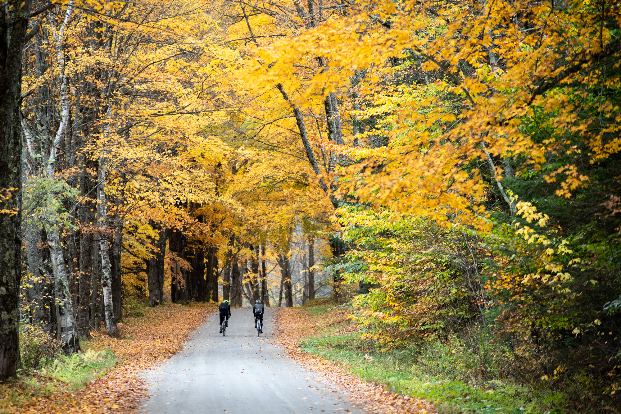 A tunnel of golden maples.