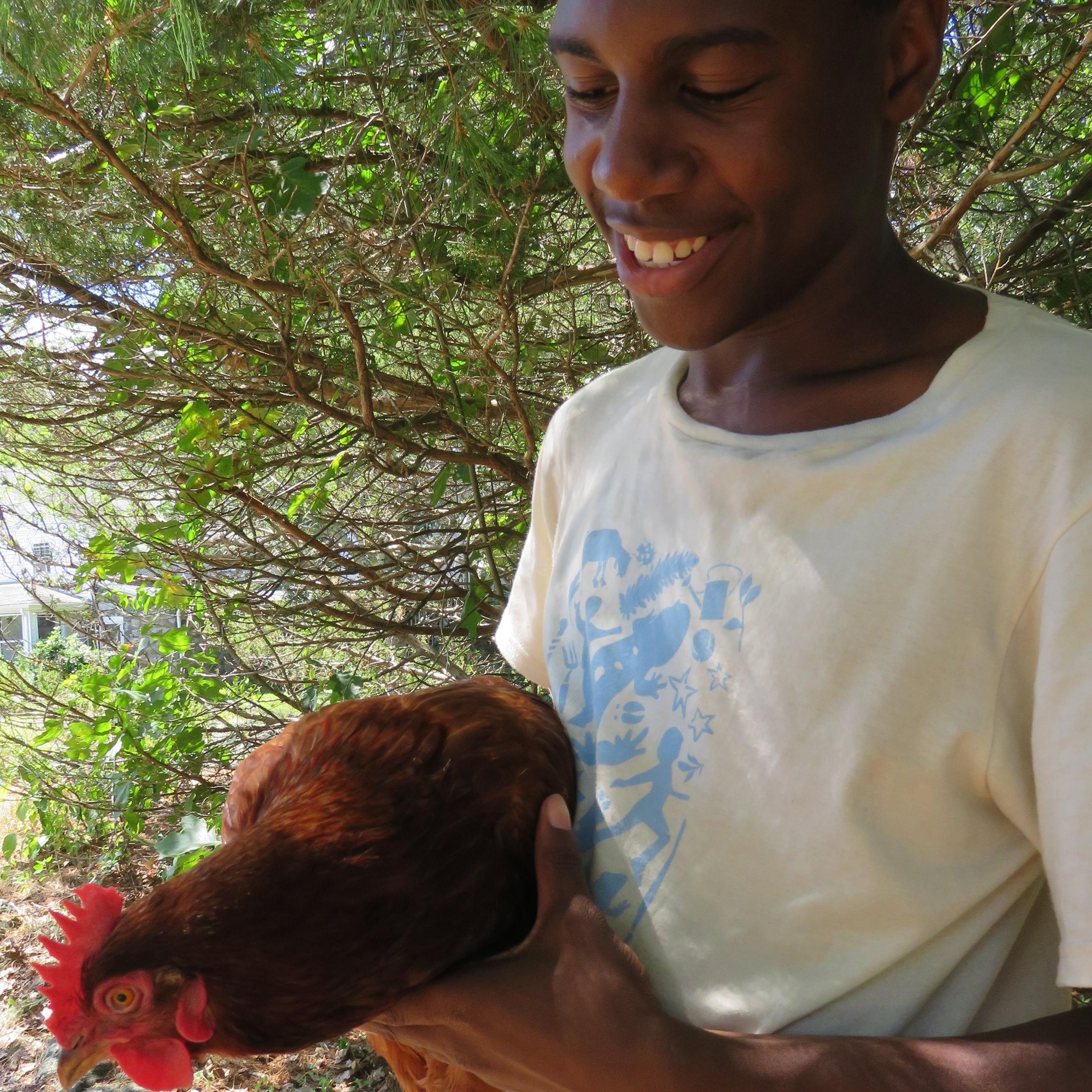 Van and chicken.JPG