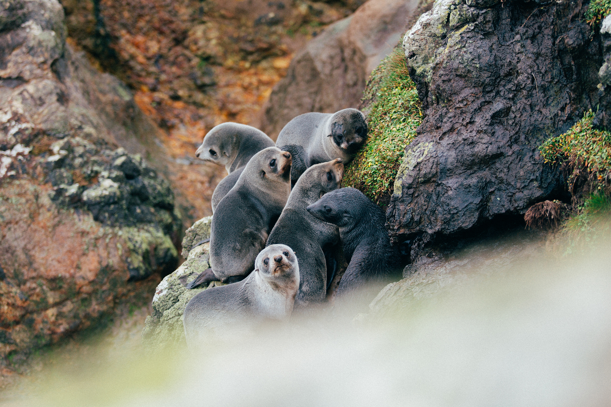 NZ Fur Seals.jpg