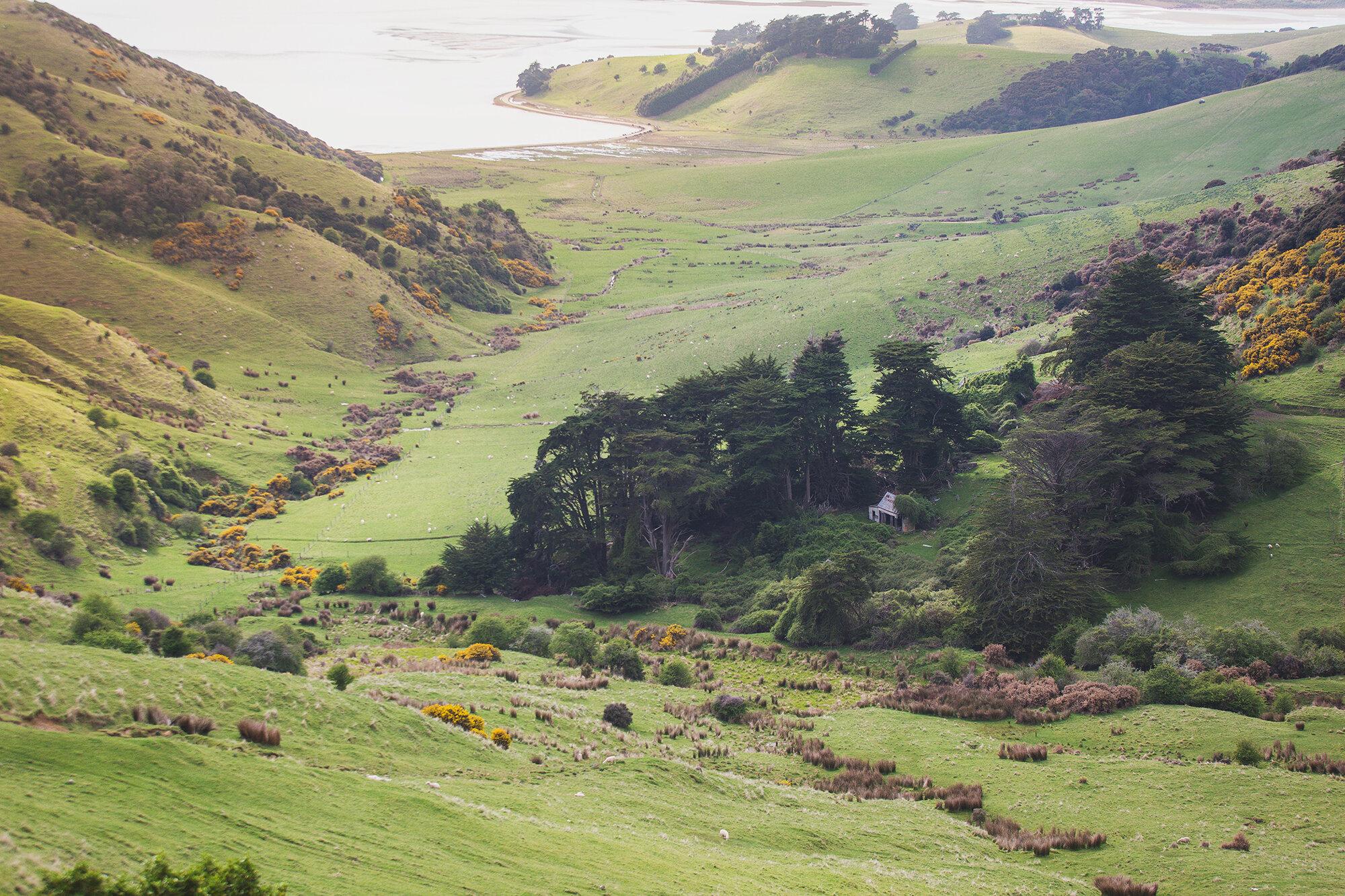 Otago Peninsula-1274a.jpg