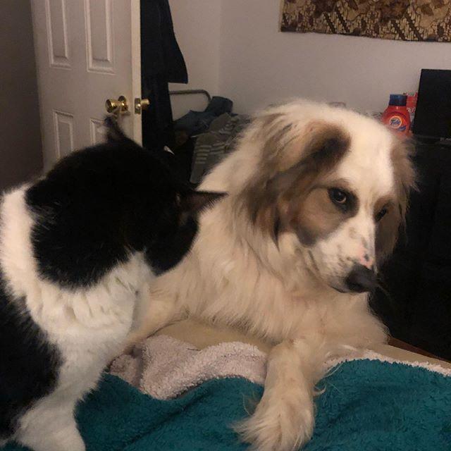 Brothers. #bjornthedoggy #zagreusthecat