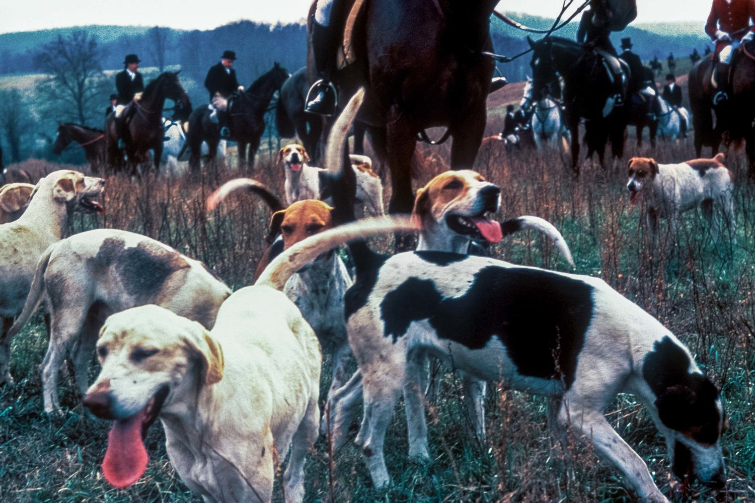 1978-d-0101-geoffrey-biddle-year-1978-fox-hunting-hounds.jpg