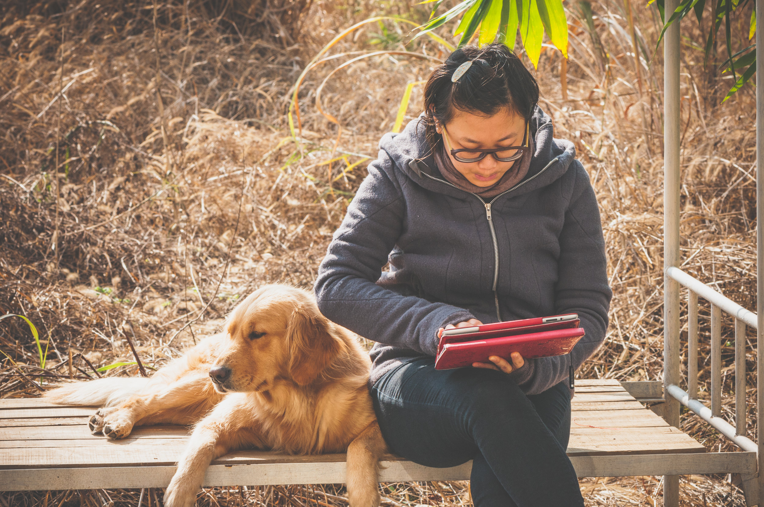 We can't guarantee your dog will approve, but BookBub is a bibliophile's dream.