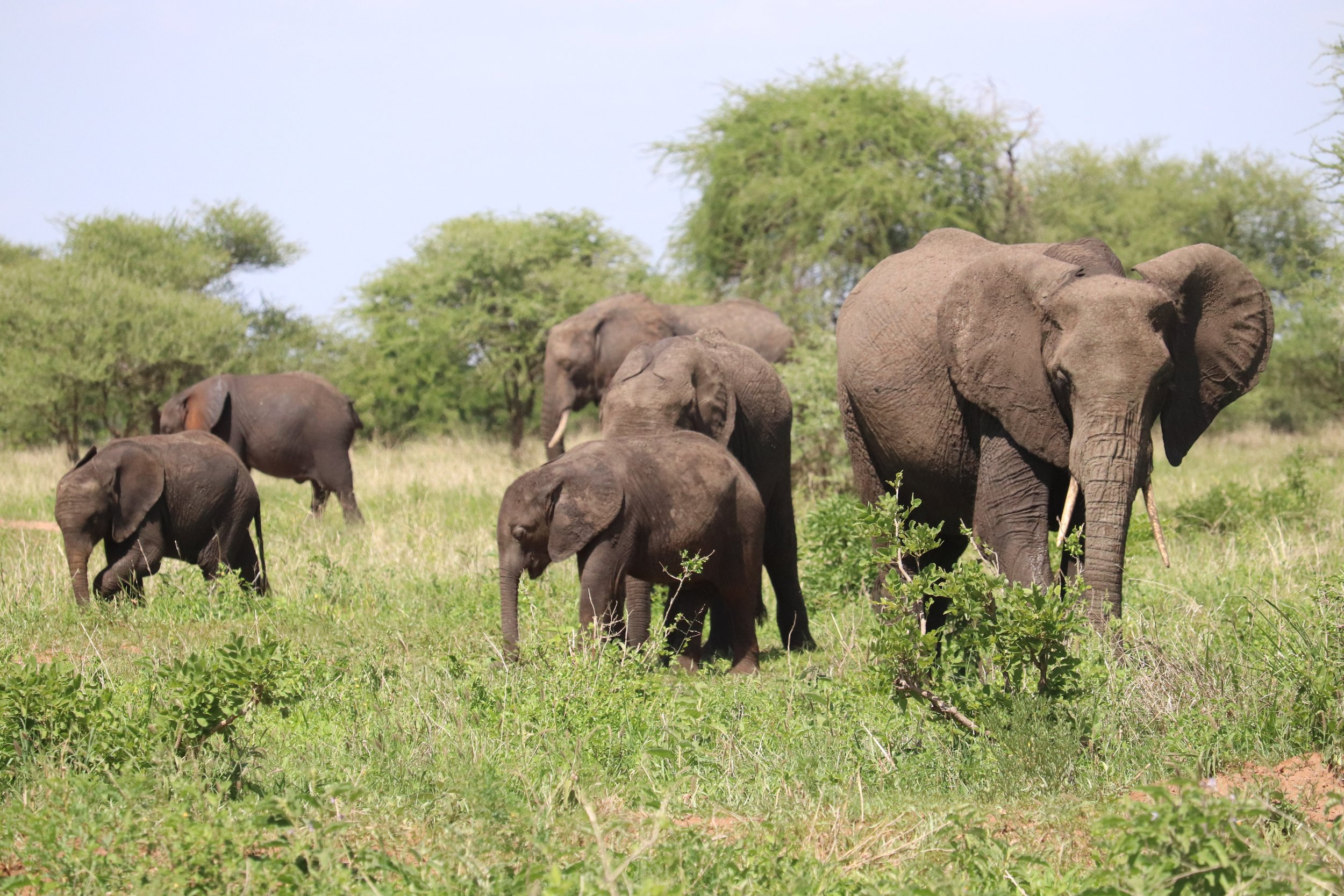 elephant herd.jpg