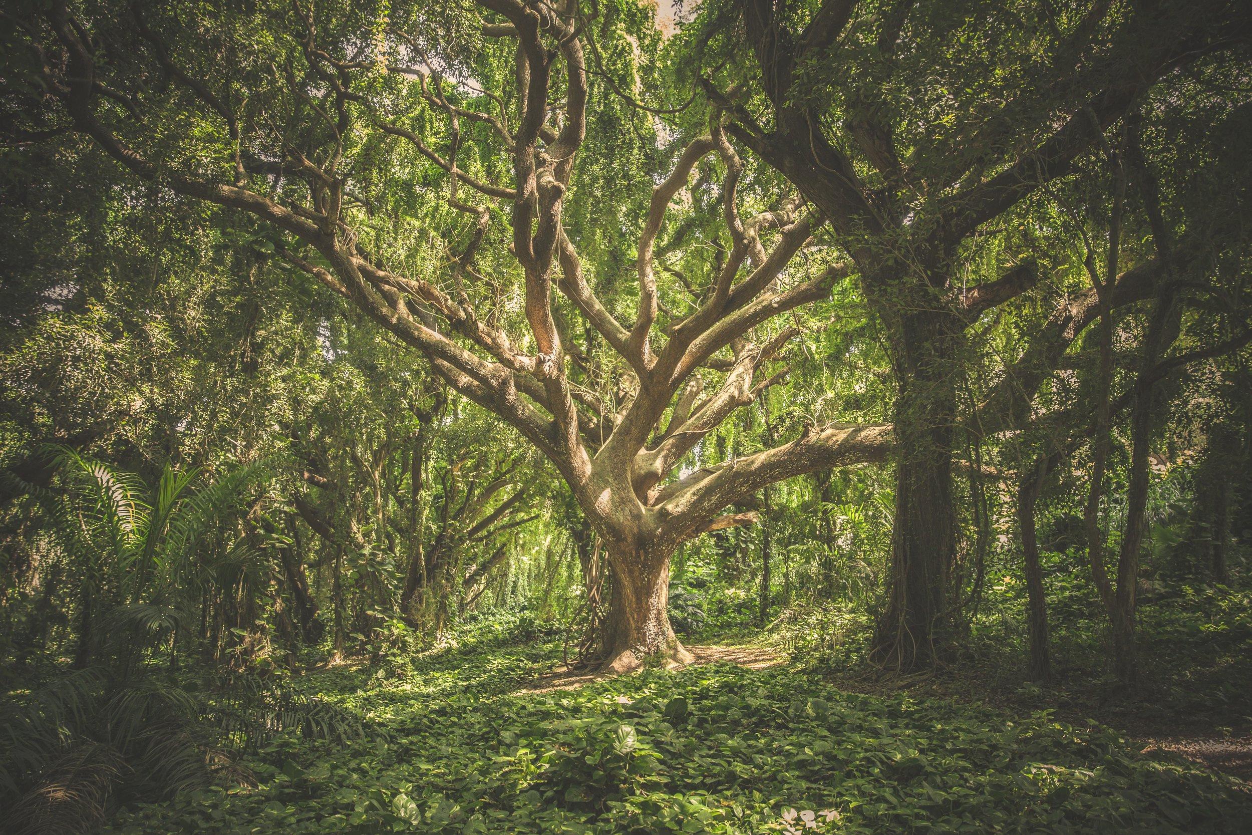 Massive+Tree.jpg