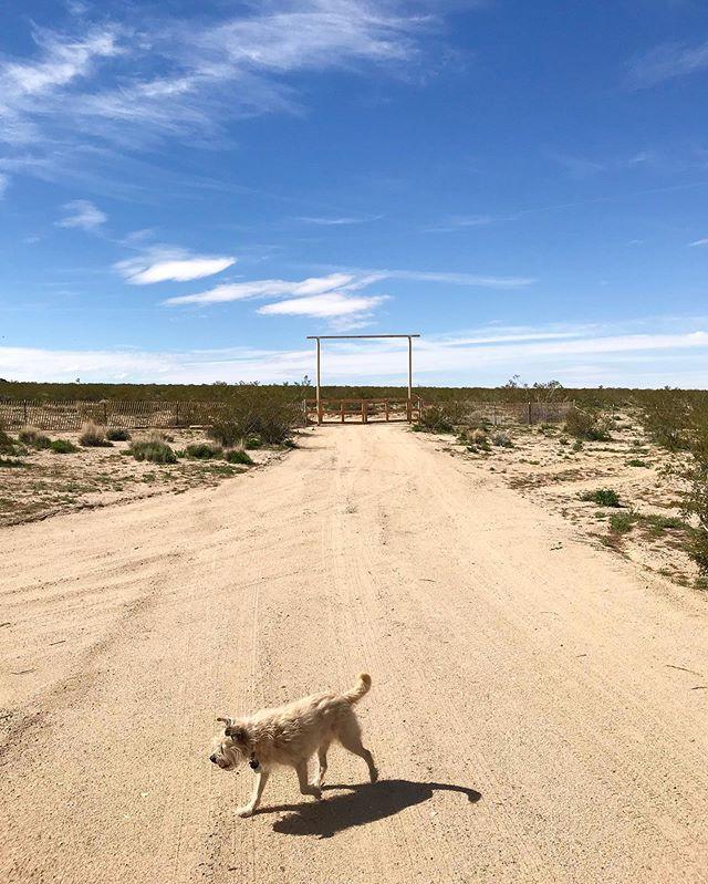 Missing those desert days ☀�🌵