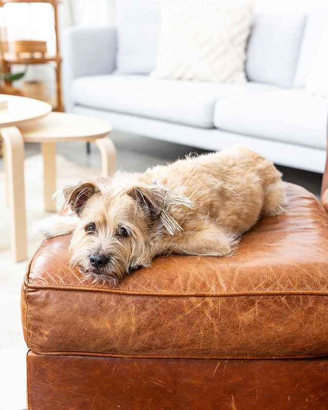 Did we miss national dog day?! � Luckily for Joey, it's dog day every day at our place �� . See more photos + our interview on @glitterguide ✨ . Photos by @gillianwalsworth 📷