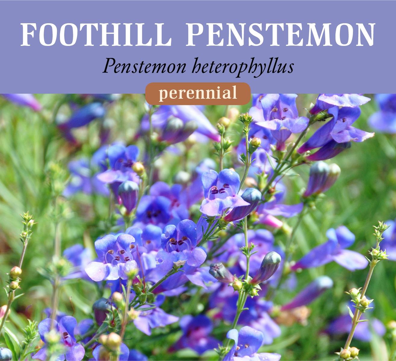 foothill_penst.jpg