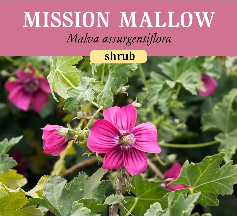 mission_mallow.jpg