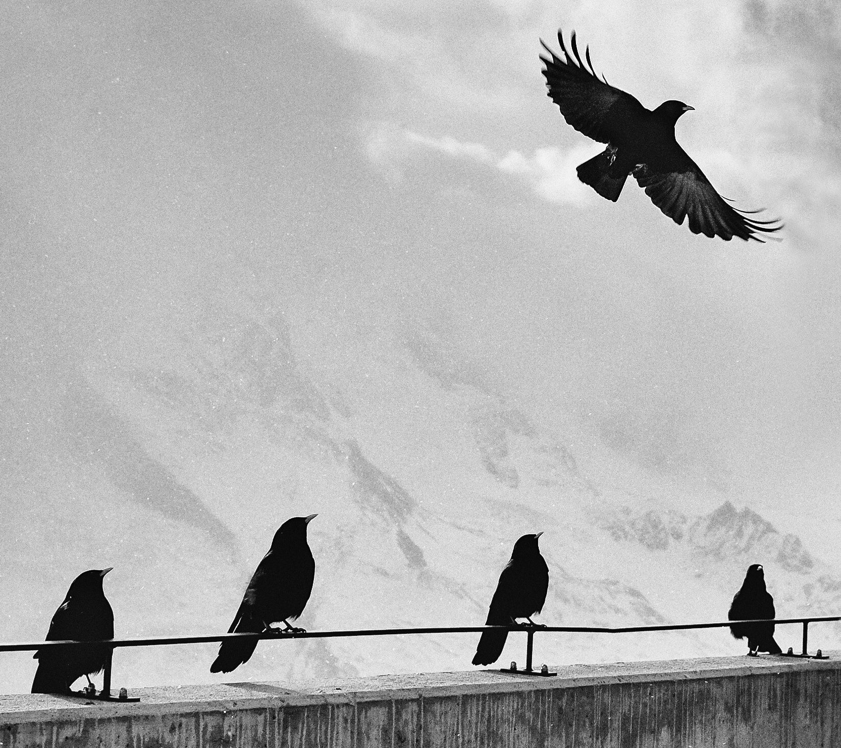 "The meaning of Krager - Etymology: From the Old Norse word kraka (""crow"") Norwegian Bokmål.The corvid family of crows, ravens, and jays are considered the most intelligent of all birds"