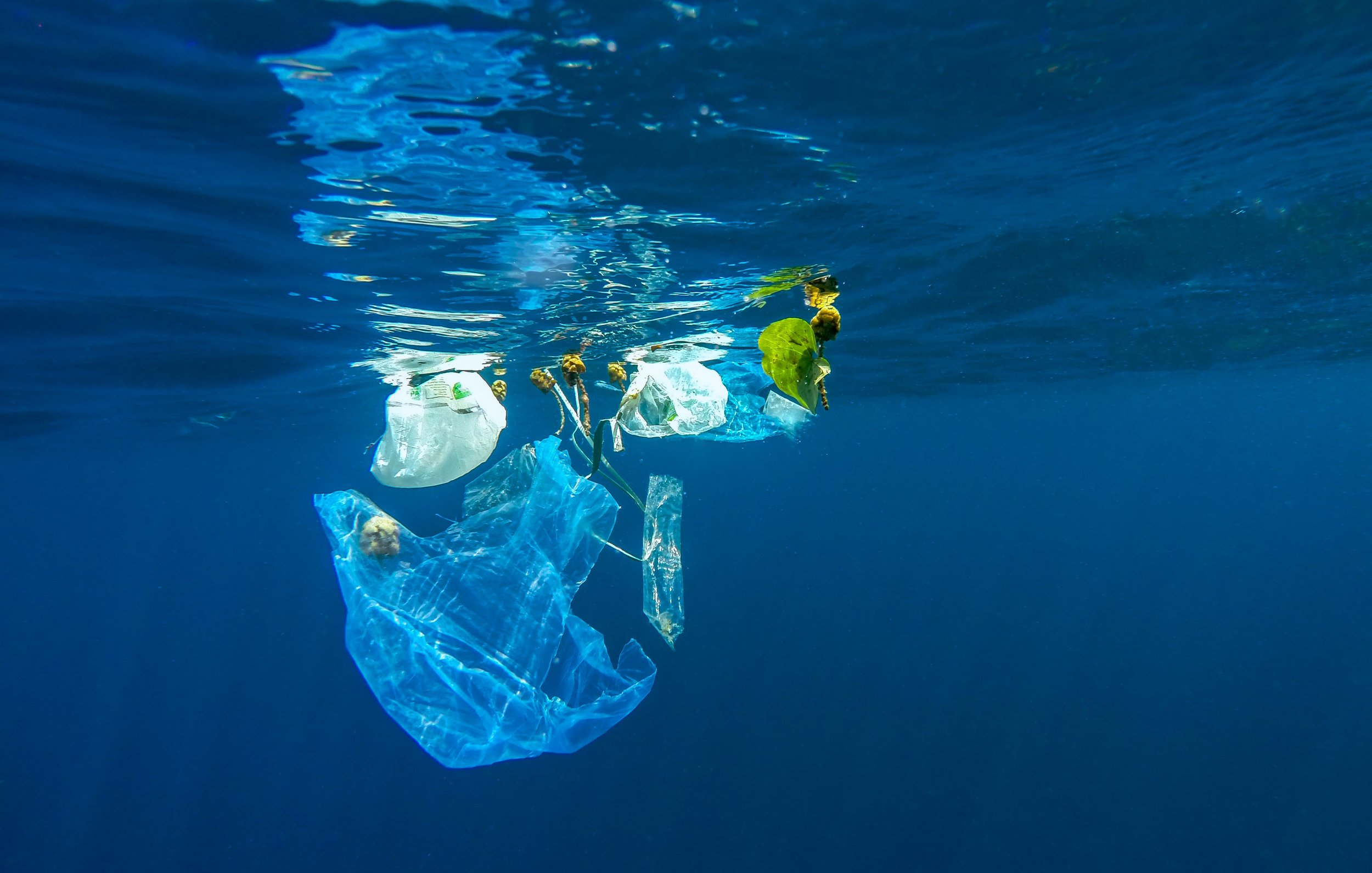 1. PLASTIC IN OUR OCEAN SUCKS.   Did you know that over 8 million tons of plastic is dumped into our oceans each year? By 2050 there will be more plastic - by weight - than fish. Seriously – we are drowning our ocean in the pollution we create!