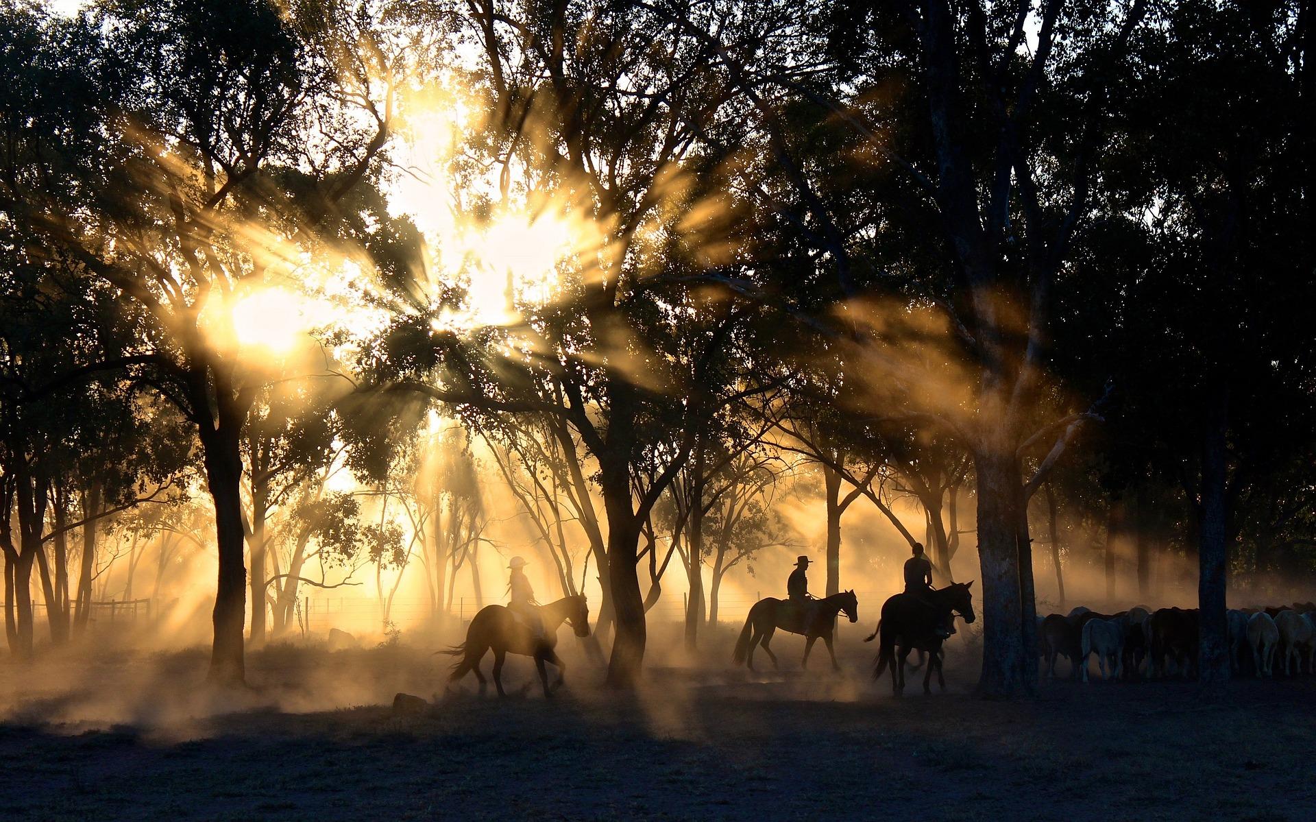 cowboys-1826527_1920.jpg