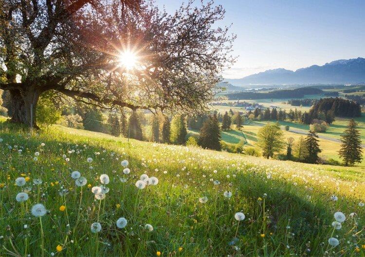 paysage-nature-et-soleil.jpg