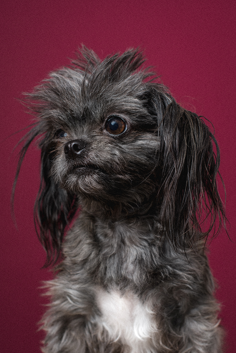 Bullet_The_Dogs_By_Alex_1264_dog_photographer_london.jpg