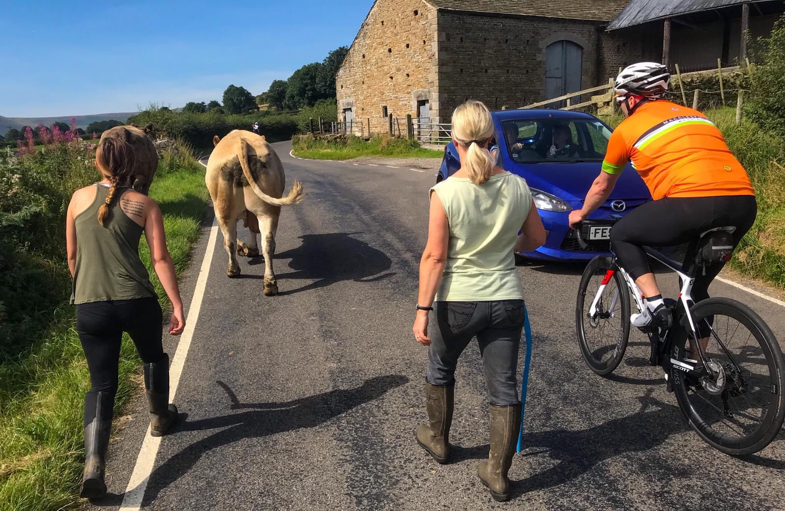 Having grown up on a farm, Simon was the first to run with the bulls between Hope and Edale, which had thankfully slowed our Bennet-led cafe sprint.