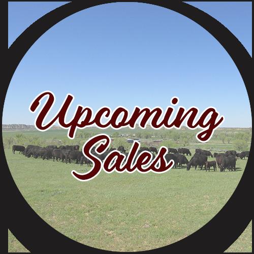 upcoming-sales.png