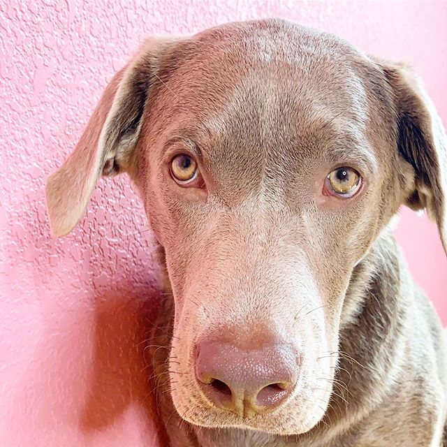 When your dog notices the dark phase of your brow healing! . Jk y'all it's not that bad at all. However there definitely is a healing process where you can't sweat for 5-10 days or wet your brows! . Be sure to plan accordingly when booking your mircroblading! . . . . #meichapro #madewithmeicha #microbladingaustin #brows #browsonfleek  #microblading #austinmicroblading #houstonmicroblading #eyebrowmicroblading #sanantoniomicroblading #beauty #eyebrows #archaddicts