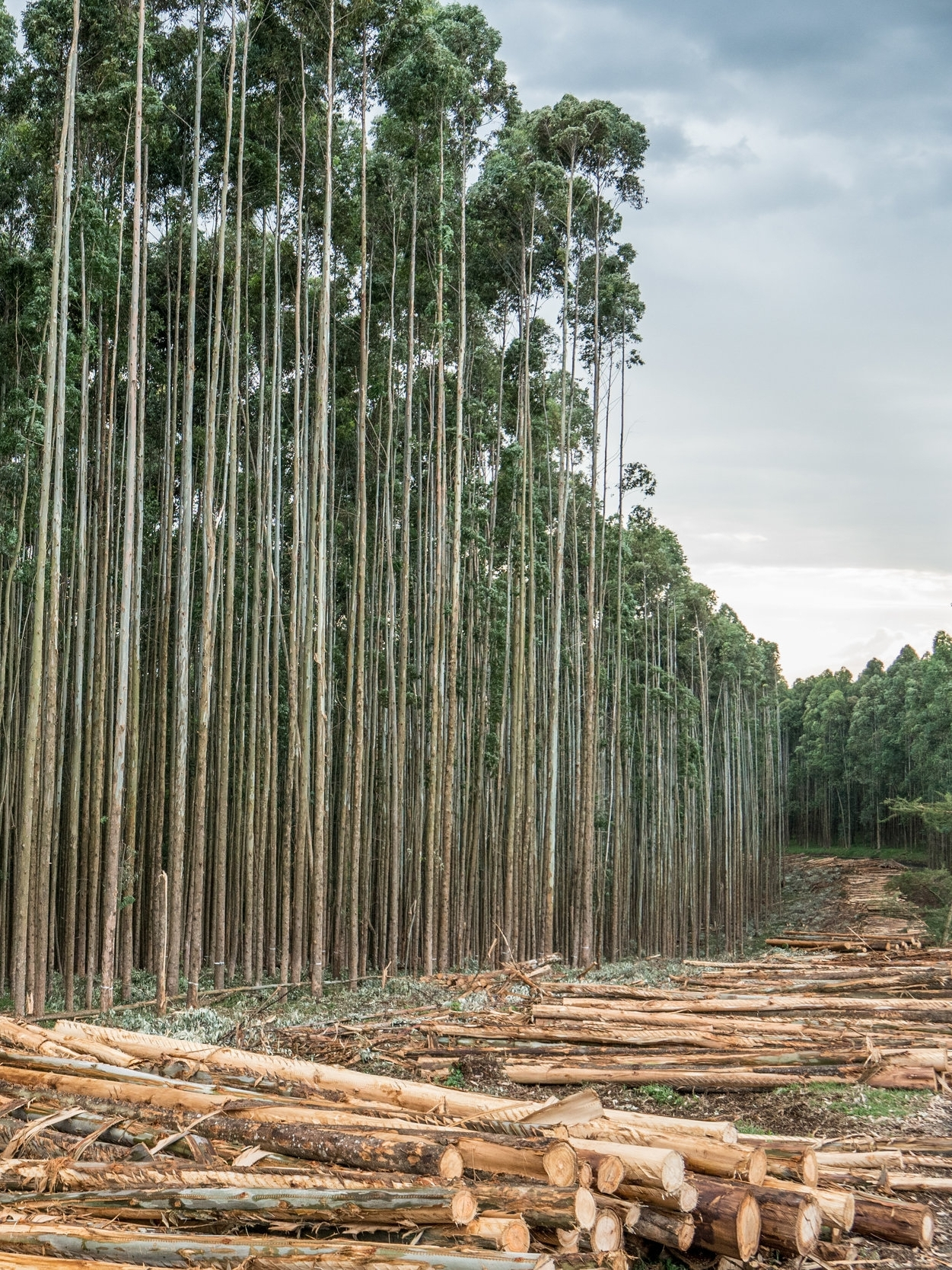 Global deforestation is accelerating. - Extractive industries and land conversion for agricultural products like beef, soy, palm oil, and pulp and paper are driving tropical deforestation. In the last decade alone, an area of forest the size of the United Kingdom, France and Germany combined has been lost forever. This destruction is unnecessary and is undermining efforts by the international community to address climate change, sustainable development and human rights.