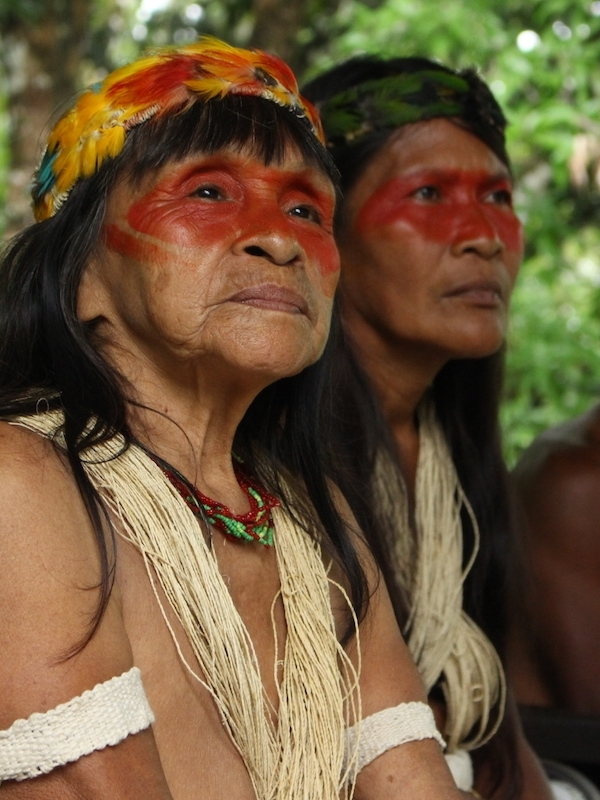 Momentum to protect rainforests is growing, but more is needed. - A coalition of government, business, indigenous peoples, science, NGO and civil society partners are working to halt deforestation. However, to achieve the speed and scale of change required, we need to bring the moral, ethical and spiritual dimension of humanity to bear more strongly on these efforts.