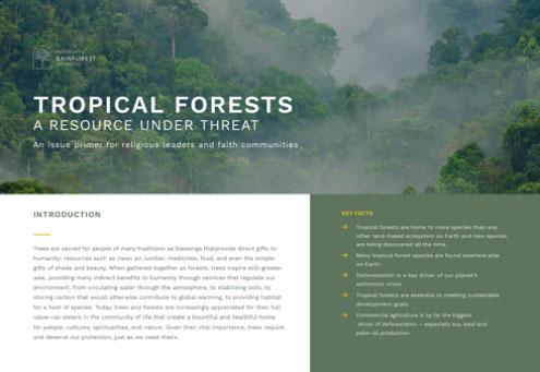 ENG | FRAN | ESP | PORT | IND  An issue primer outlining the importance of tropical forests to addressing climate change, biodiversity loss and poverty, and the urgency of the global deforestation crisis.
