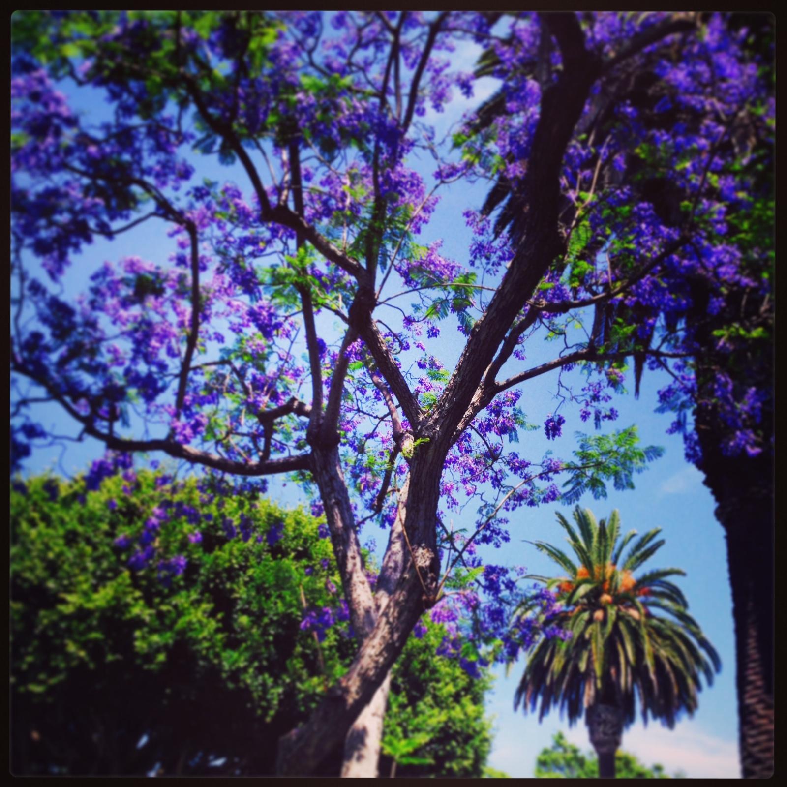 A beautiful day in LA