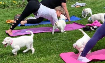brandeberry wine yoga puppies.JPG