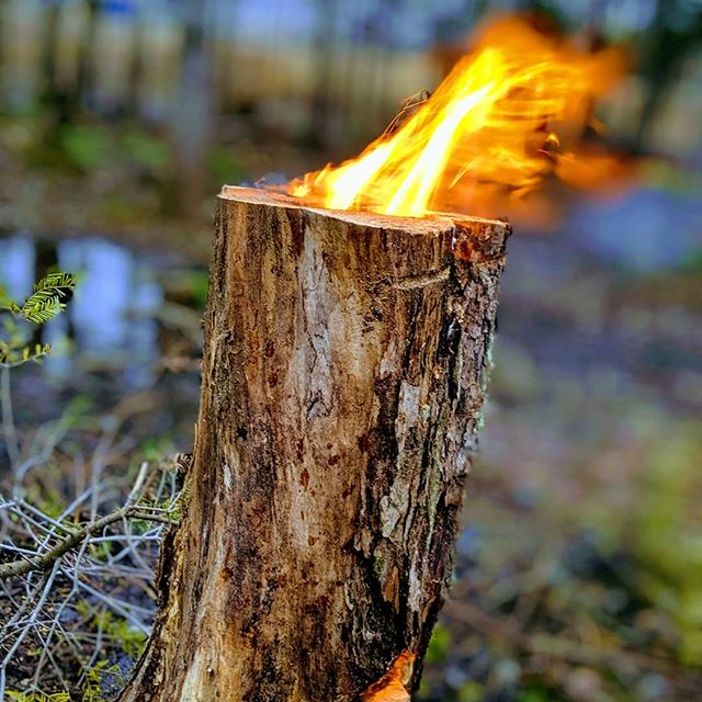 La fameuse bûche scandinave #fire #familytime