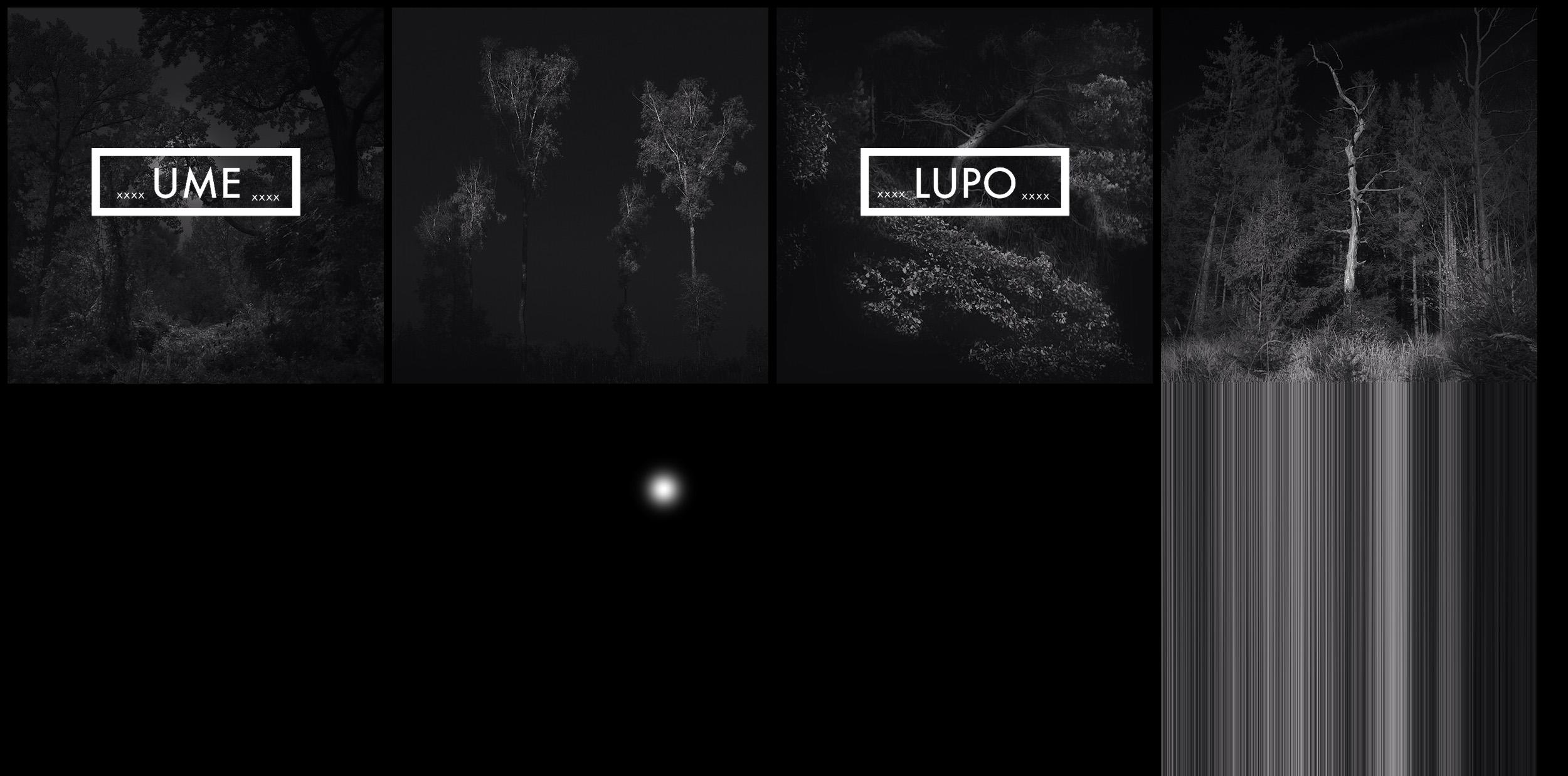 NORFLIET UME LUPO Photo Show.jpg