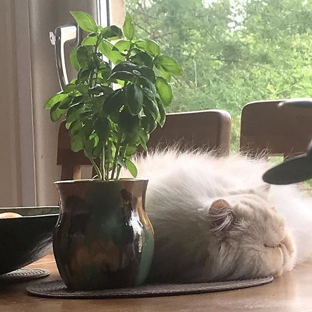 Awwe look at George❤️...on the dining table!!!! #badcat #furball #givein #hestheboss Cx