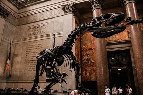 t rex at American Museum of Natural History upper west side manhattan new york city ny