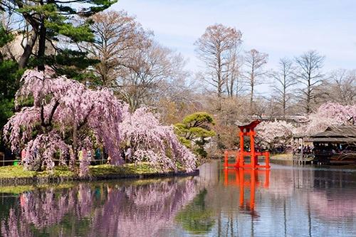 brooklyn botanic garden Japanese garden brooklyn new york city ny