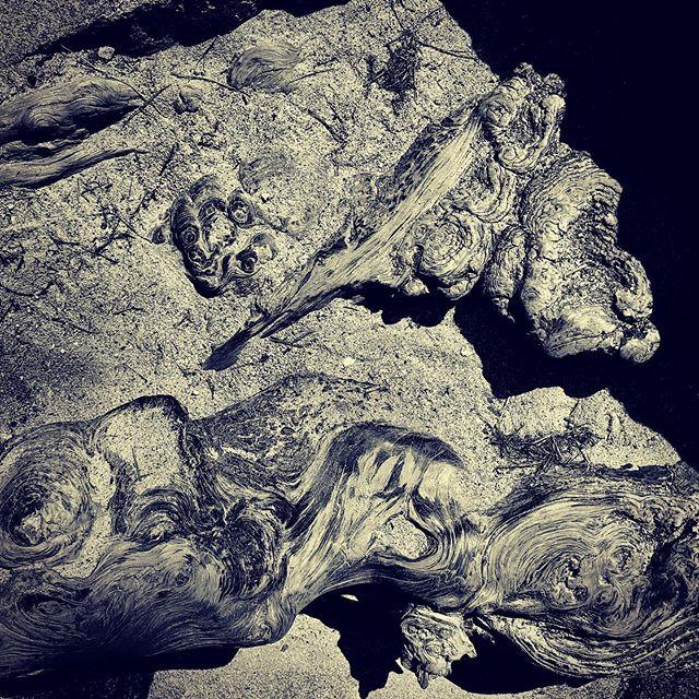 The root well worn. #stonemountain