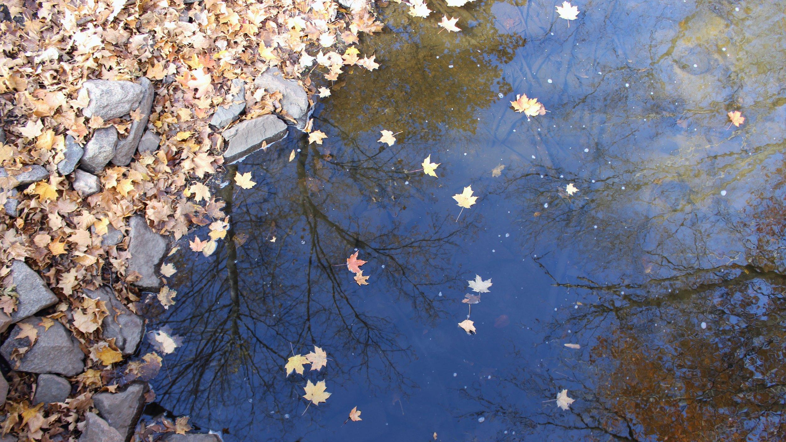 autumn-walk-10-21-16-22.jpg