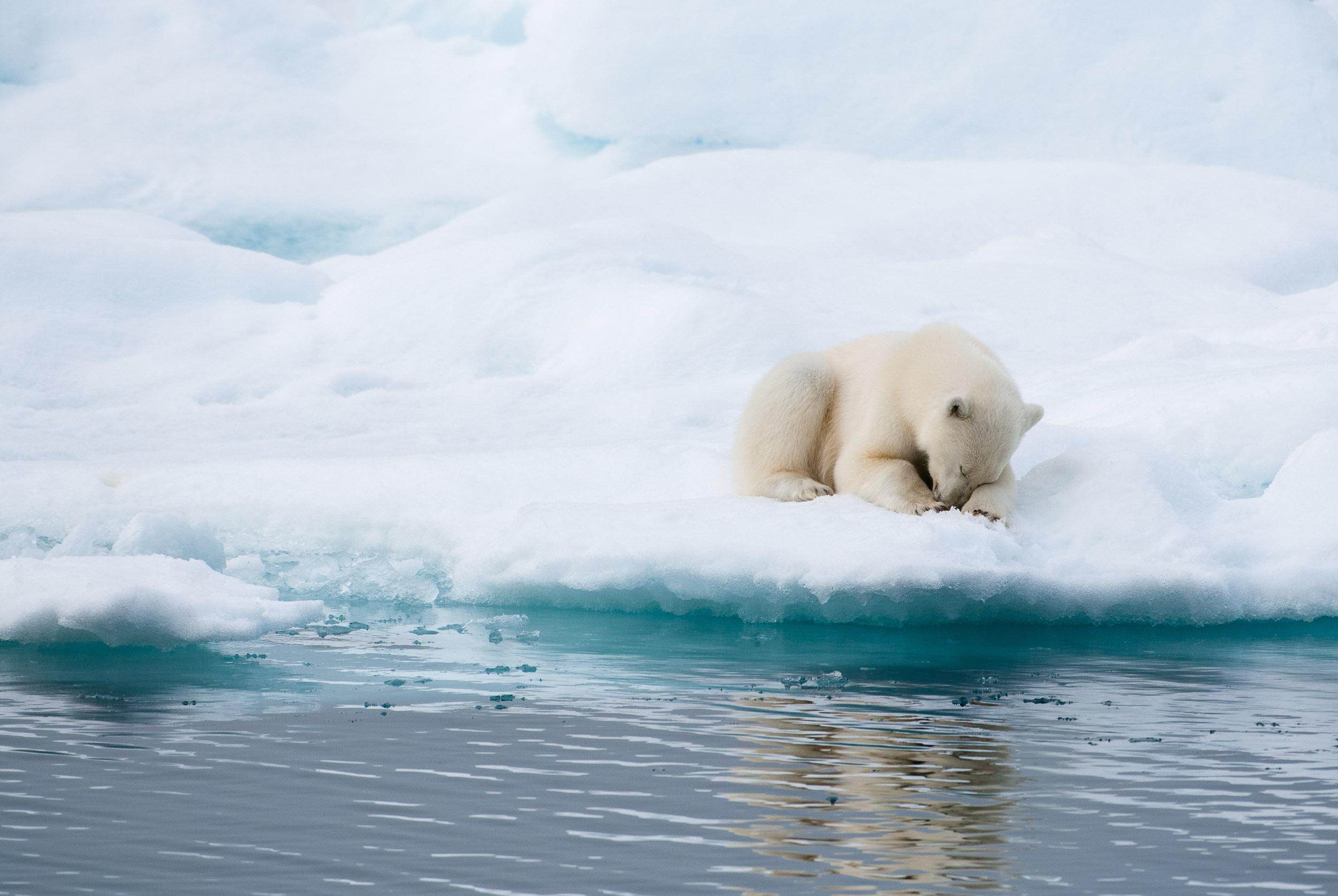 Polar bear sleeping on an ice flow, Hinlopen Straight, Svalbard, Norway.