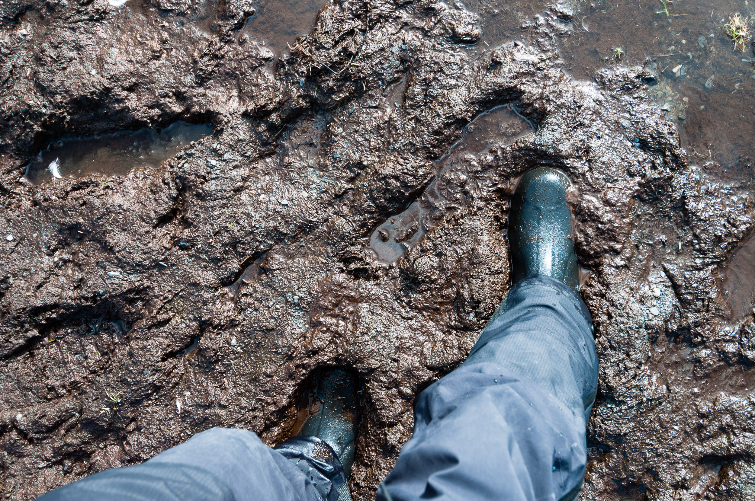 Walking through a muddy bog in rubber boots, Stromness, South Georgia.