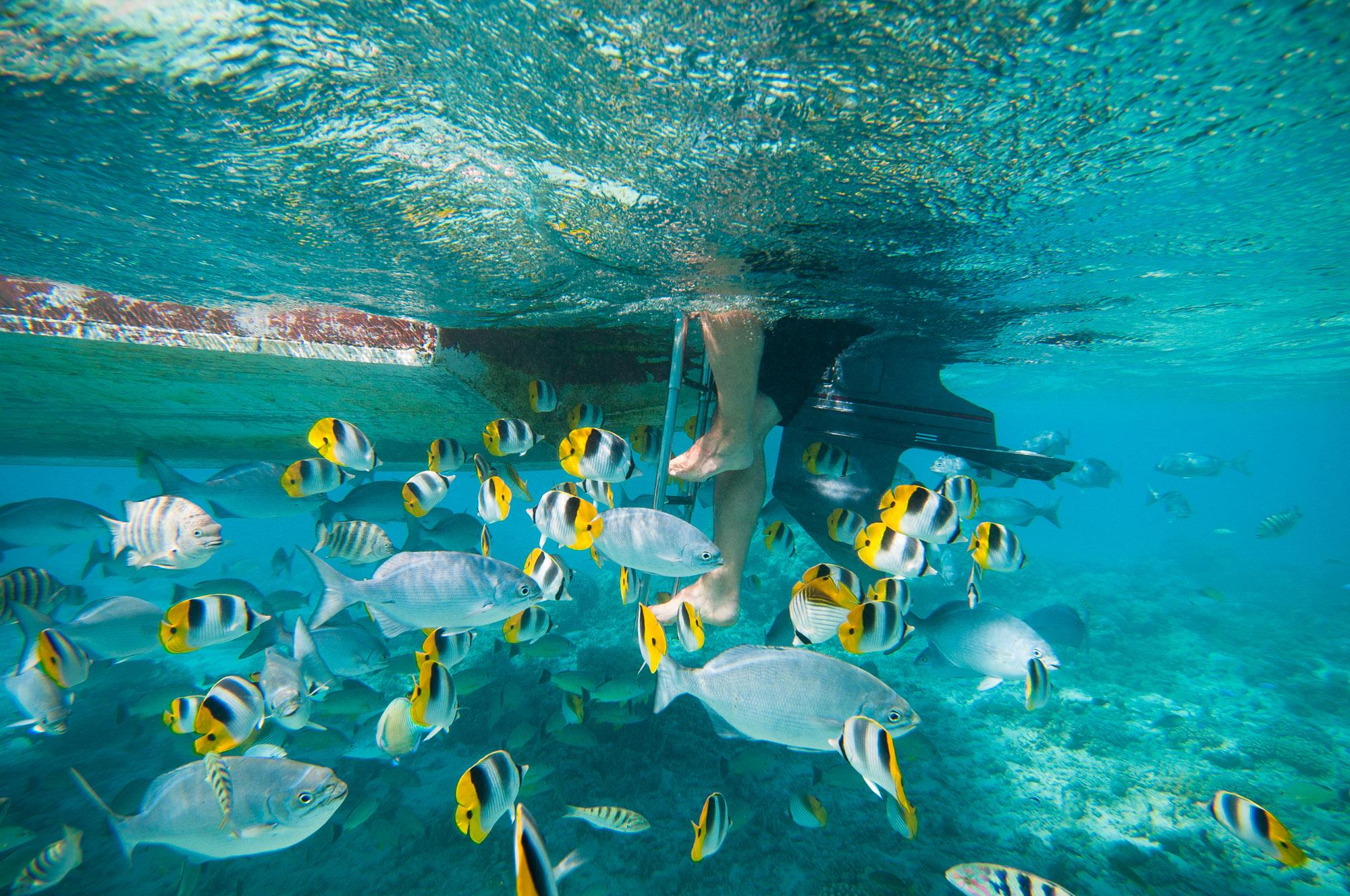 Cook Islands. © www.thomaspickard.com