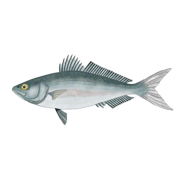 KAHAWAI