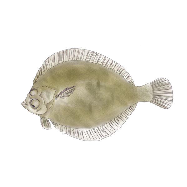 LEMON SOLE