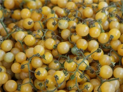 White Currant Tomato (photo courtesy from  Baker Creek )