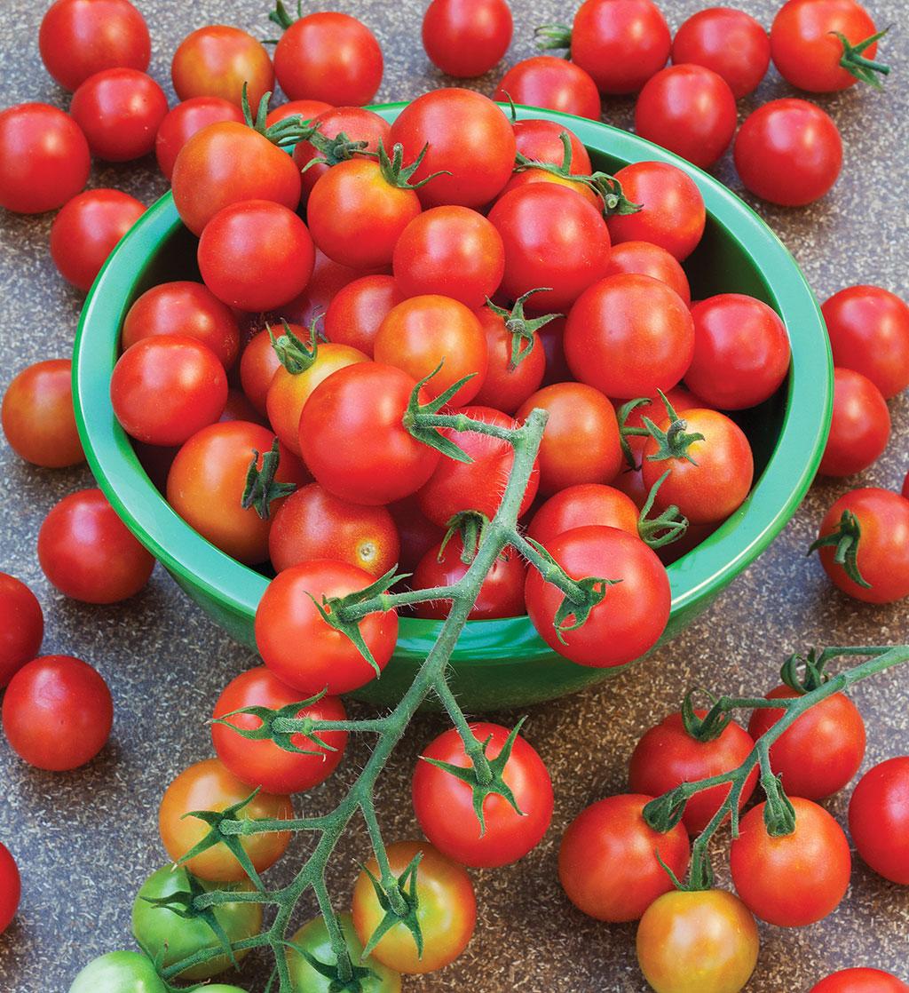 super-sweet-100-tomato.jpg